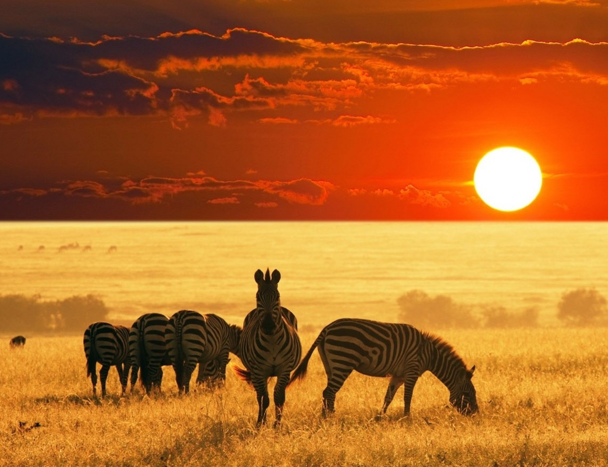 Kenya -Wild & Beautiful (7 days /6 nights)